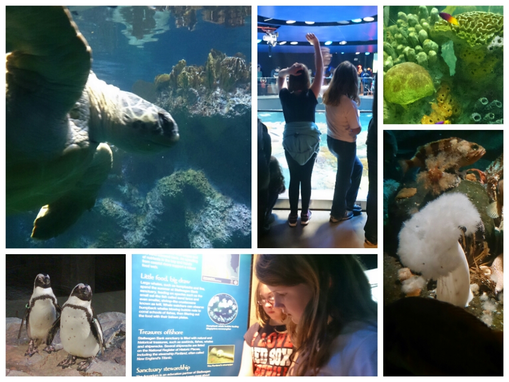 wpid-aquarium-collage.jpg