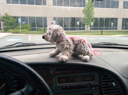 Husk sitting on my car's dash