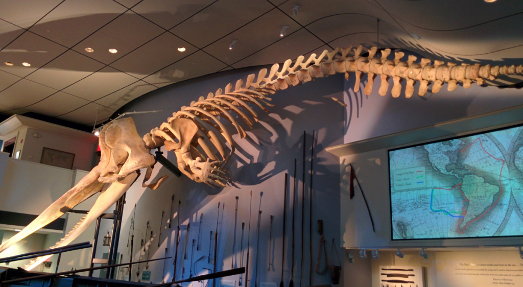 Whale skeleton at Whaling Museum